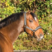 Rambo Diamante Headcollar