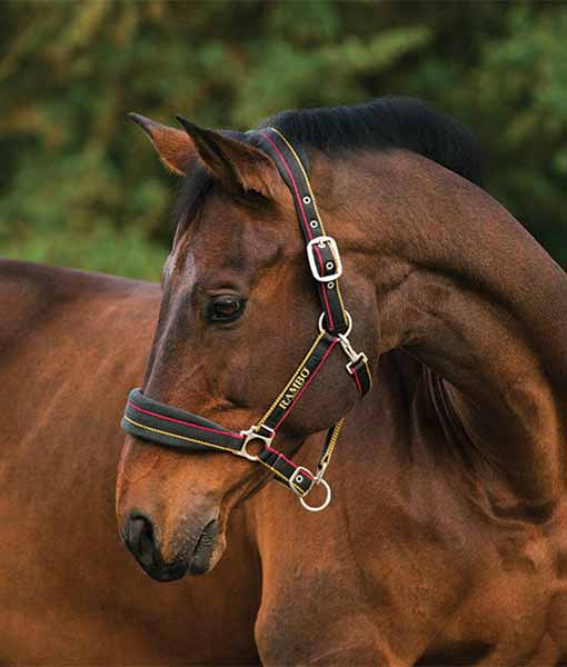 Headcollar & Leadropes