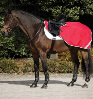 Amigo Competition Sheet - Horseware Ireland