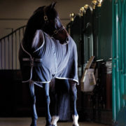 Rambo Stable Sheet - Black with Pale Grey & Grey